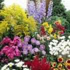 gartenpflanzen, stauden, obstpflanzen, ziergräser bestellen, Garten Ideen