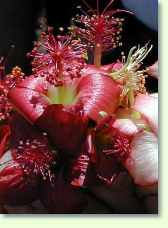 Blühende Zimmerpflanzen - Pflanzenfreunde Bluhende Zimmerpflanzen Arten