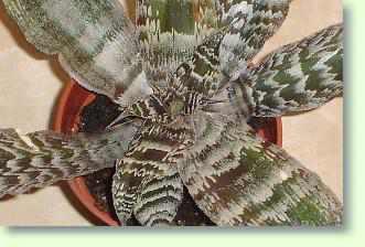 Badezimmer Pflanzen Pflanzen Furs Bad Pflanzenfreunde