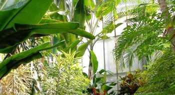 Pflanzen Im Buro Pflanzenfreunde