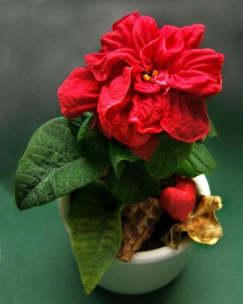 Bl hende zimmerpflanzen pflanzenfreunde - Zimmerpflanze sonnig ...