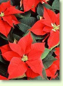 Pflanzen qualit t durch richtige pflege - Epiphyten zimmerpflanze ...