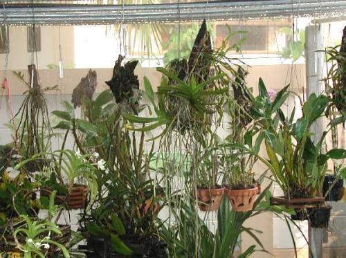 orchideen erfolgreich pflegen pflanzenfreunde. Black Bedroom Furniture Sets. Home Design Ideas