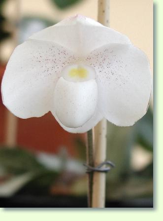 orchideen in den 4 jahreszeiten pflanzenfreunde. Black Bedroom Furniture Sets. Home Design Ideas