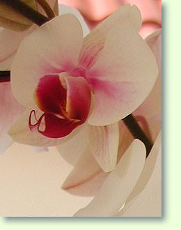 baden w rttemberg h ndler f r orchideen und zubeh r. Black Bedroom Furniture Sets. Home Design Ideas