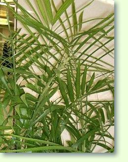 Pflanzen Im Badezimmer Pflanzenfreunde