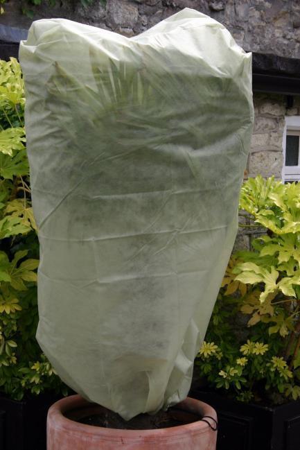 Frostschutz für Palmen auf Terrasse und Balkon ~ 20021641_Winterharte Sukkulenten Für Draußen