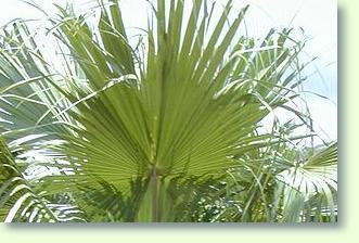 Pflanzen im Badezimmer - Pflanzenfreunde