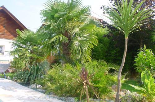 Geliebte Palmen Fuer Den Garten #RX_73
