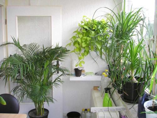Pflanzen im Schlafzimmer - Pflanzenfreunde