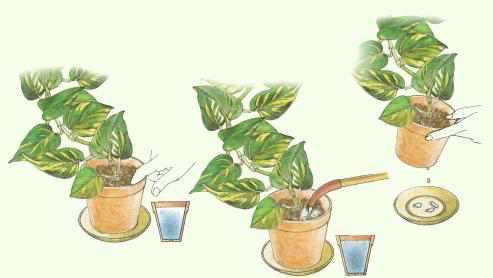 efeutute pflanzenfreunde topf und zimmerpflanzen richtig pflegen. Black Bedroom Furniture Sets. Home Design Ideas