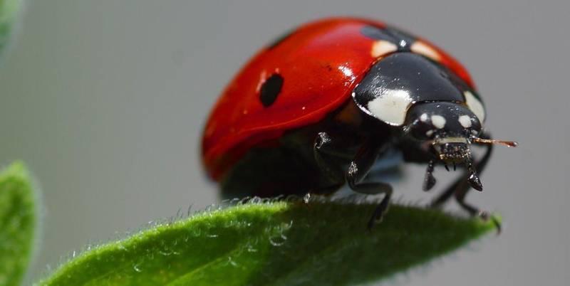 Käfer Bestimmen Käfer Arten Pflanzenfreunde