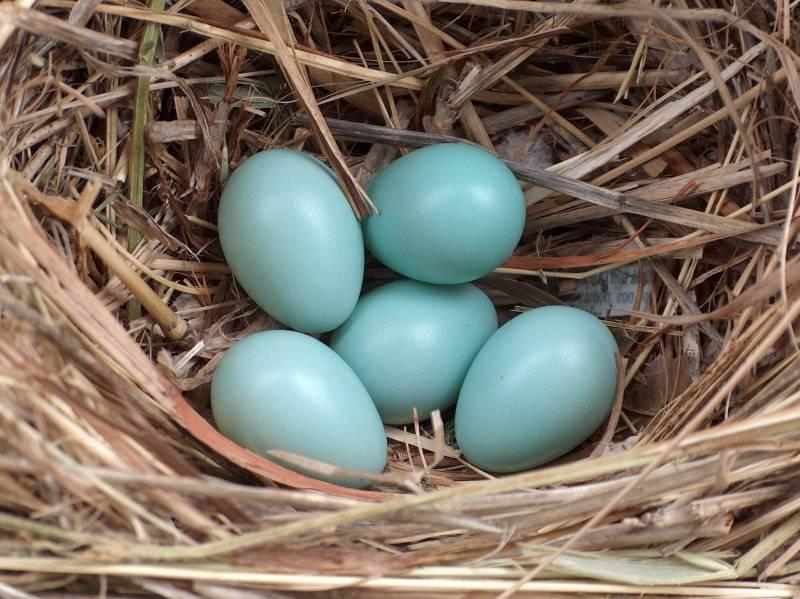 Star Eier