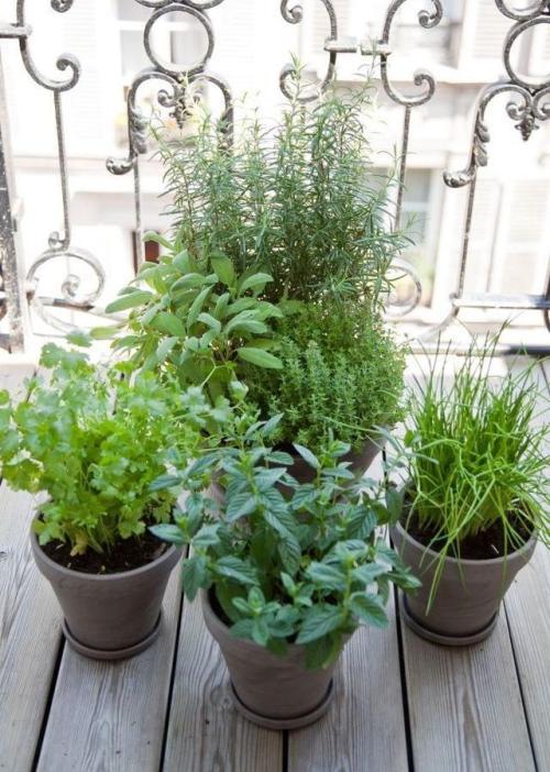 Kräuter Auf Dem Balkon Pflanzenfreunde