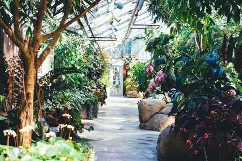 Moglichkeiten Mit Einem Gewachshaus Im Garten Pflanzenfreunde