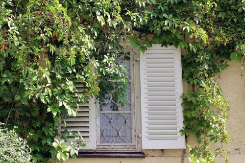 Klettergerüst Für Pflanzen : Kletterpflanzen für balkon und garten pflanzenfreunde