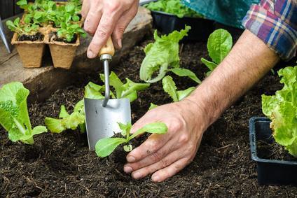 Gewachshaus Richtig Bepflanzen So Geht S Pflanzenfreunde