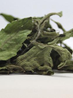 stevia trocknen