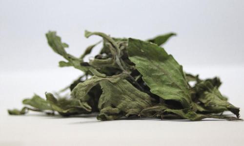 stevia pflanze pflegen pflanzenfreunde. Black Bedroom Furniture Sets. Home Design Ideas