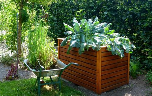 Hochbeet Gemuse Anbau Pflege Sortenempfehlung Pflanzenfreunde