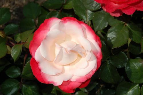 romantische pflanzenfreunde