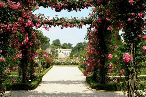 Перголы для плетистых роз 6