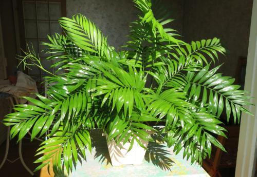 Chamaedorea Richtig Pflegen Pflanzenfreunde