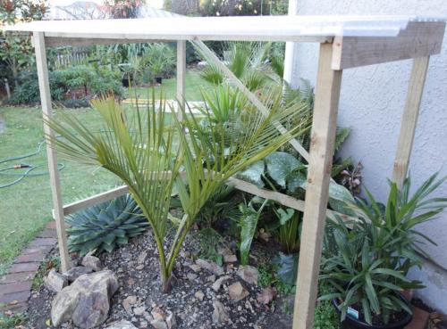 Atemberaubend Palmenpflege im Garten - Winterschutz - Pflanzenfreunde &WB_48