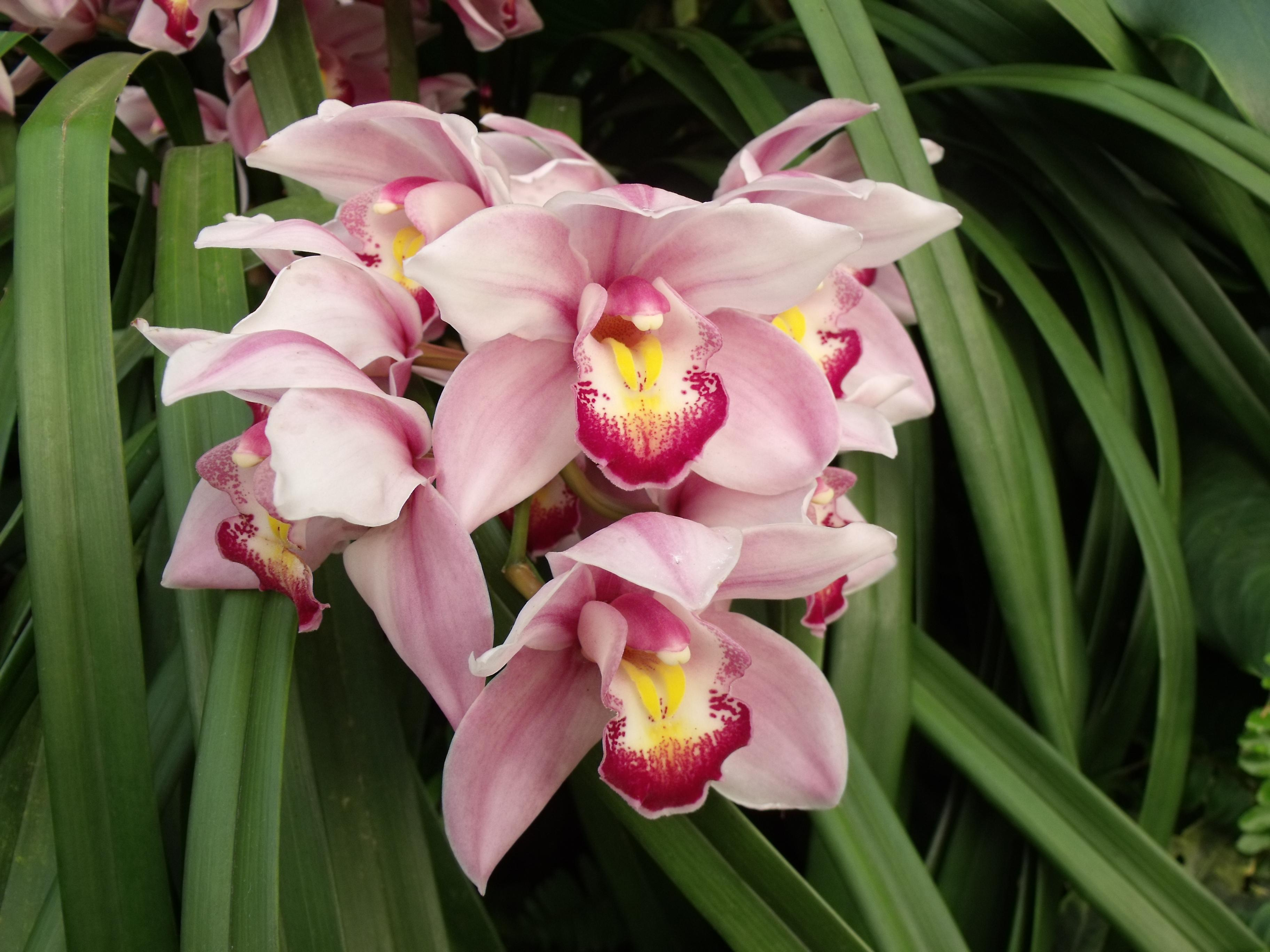 gro es fotoalbum f r orchideen. Black Bedroom Furniture Sets. Home Design Ideas