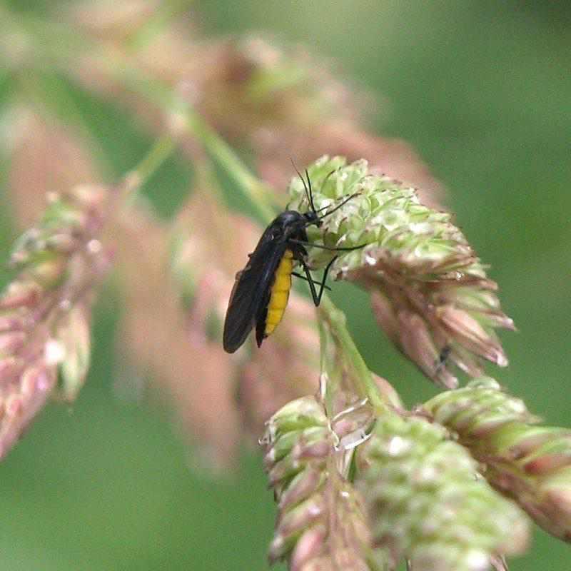 Blattl use bek mpfen pflanzenfreunde for Fruchtfliegen in erde