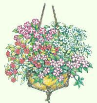 Pflanzen Für Blumenampeln Pflanzenfreunde